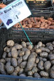 Papas azules, ja / Blue potatoes! Union Square Farmer's Market.